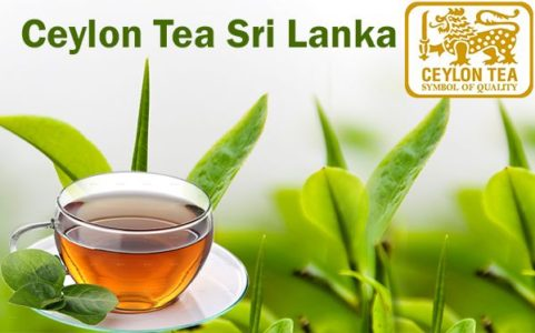 EXPERT CHRONICLE™ Ceylon-tea-Sri-Lanka-481x300
